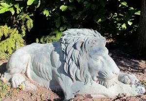 Daytime Lion