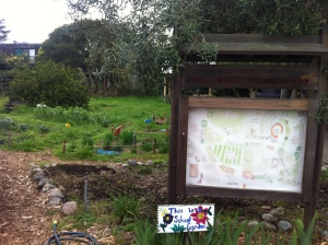 The Edible Schoolyard